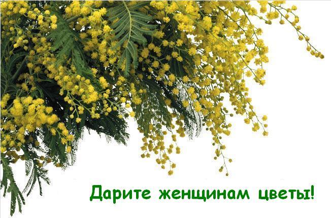 Какие цветы подарить женщине 8 Марта.