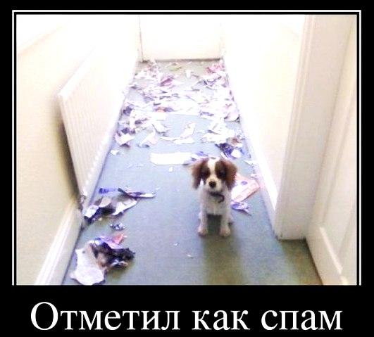 день рожденья спама))