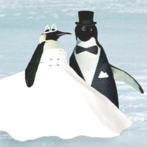 pingviny-svadba