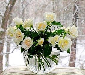 белые розы в вазе - цветы учителю
