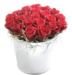 vedro-roz-cvety-uchitelyu
