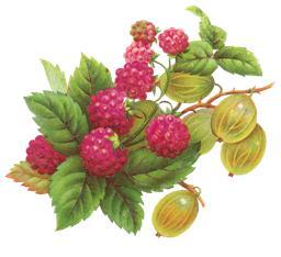 ягоды - номинации для детей