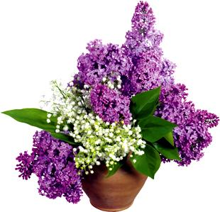сирень - выразить цветами благодарность