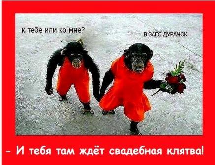 Шуточная клятва на свадьбу - обезьянки